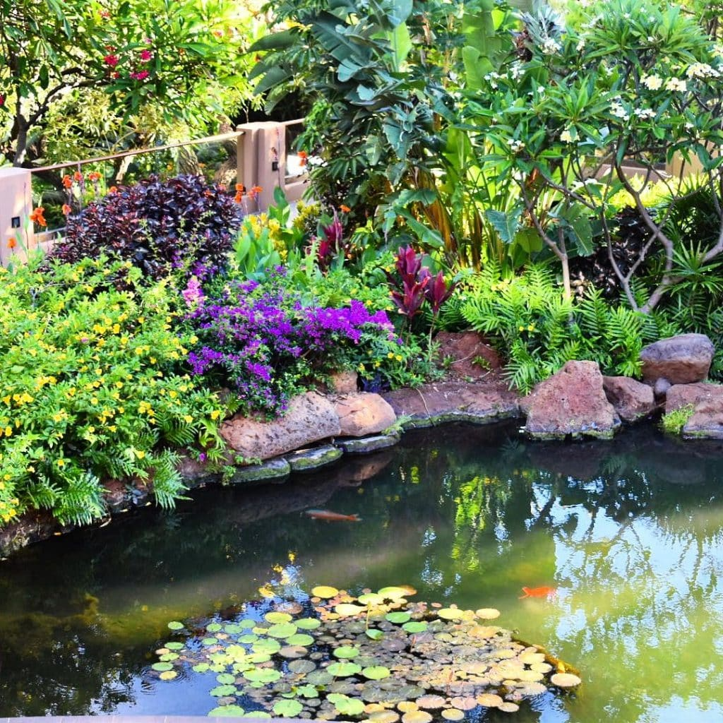 Pond in Four Seasons Lanai