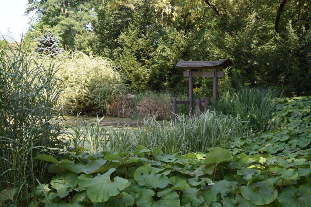 Garden and pond in Japanese style garden