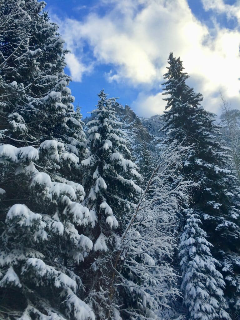 Tall Pines filled with snow