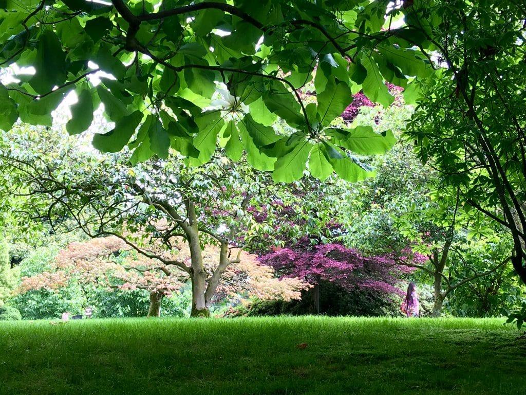 Beautiful flowers and gardens around the world: Islo Bella