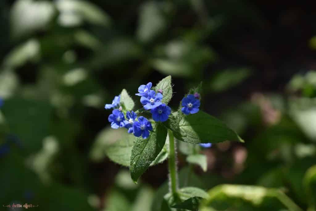 Blue purple botanical garden flowers