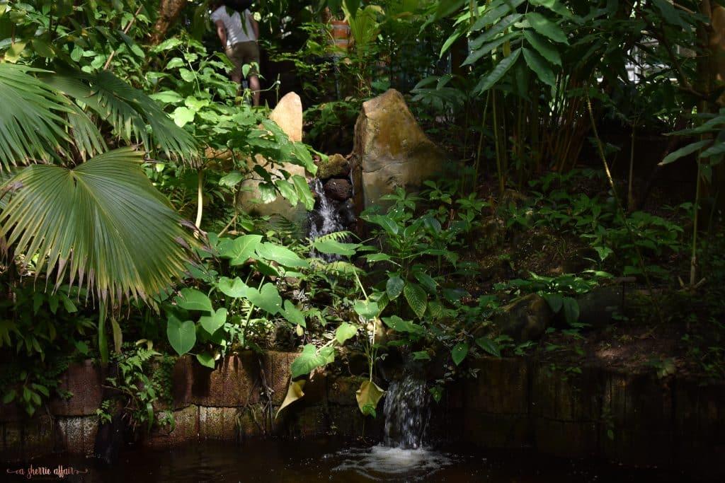 greenery with tiny waterfall