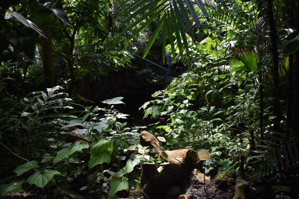 dark shaded garden