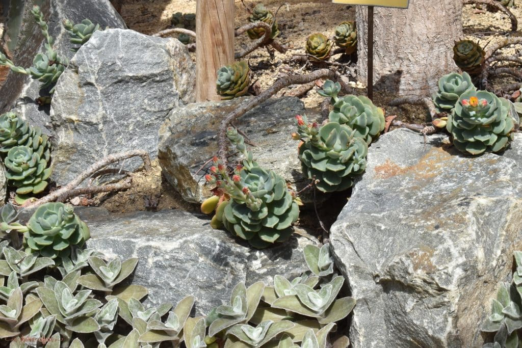 Desert succulents in desert garden house