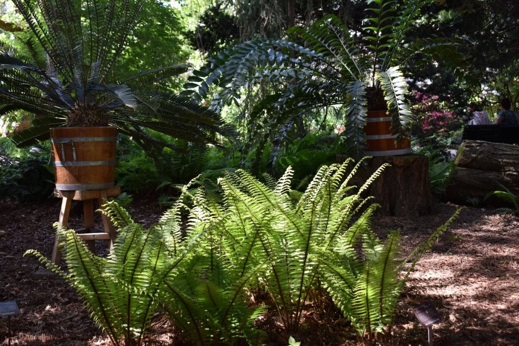 Botanical garden ferns