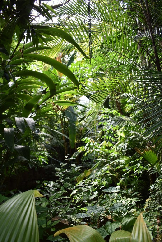 palms and ferns in garden