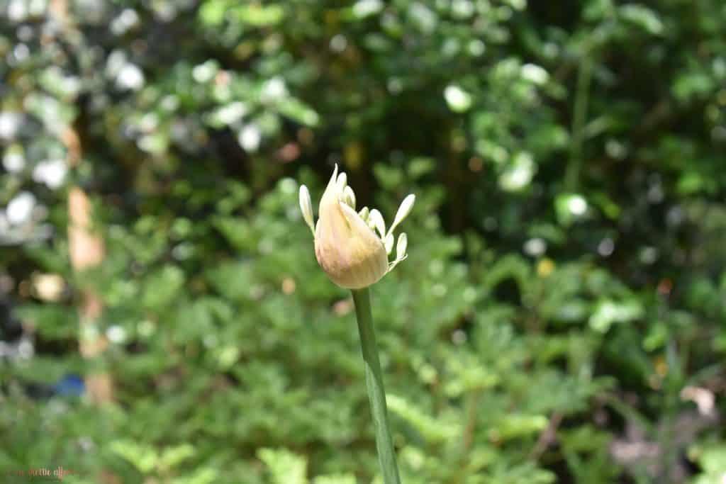 single flower in gardens